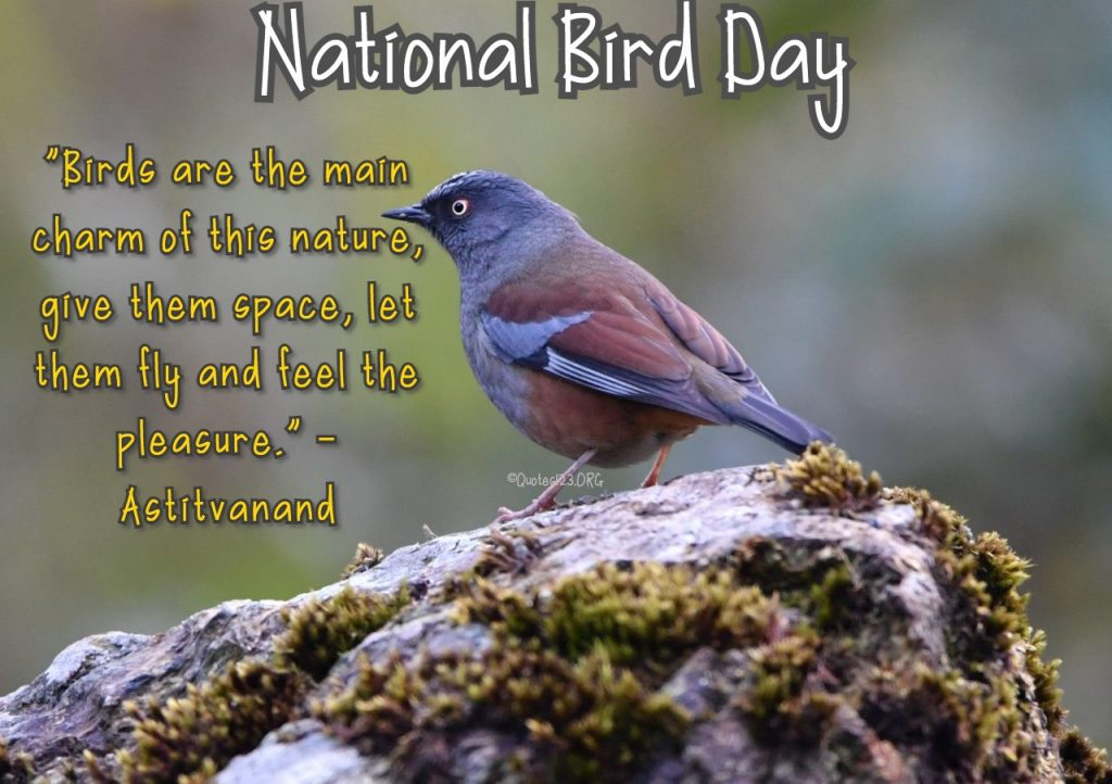 Bird Day Quotes