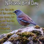 Bird Day Quotes